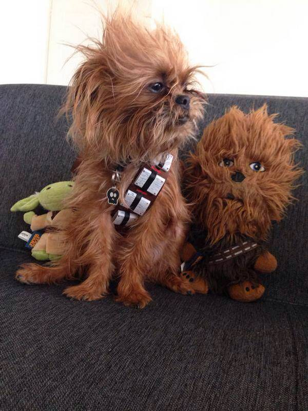http://geektyrant.com/news/chewbacca-dog-is-hans-best-friend