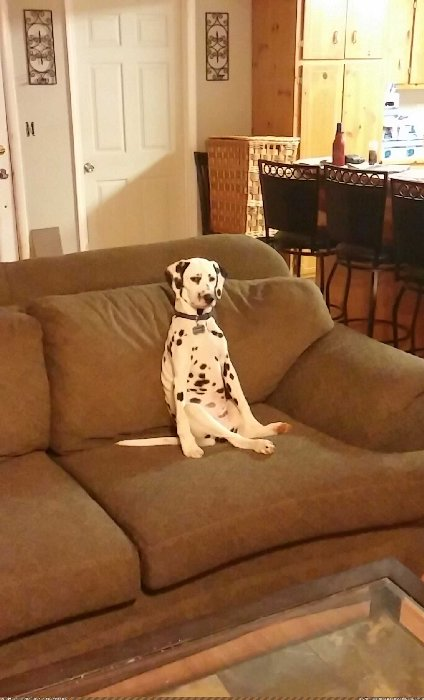 http://p.im9.eu/aww-whenever-i-go-to-my-mom-s-house-orion-is-always-sitting-on-the-couch-like-this.jpg