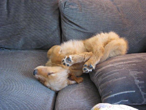http://cdn5.viralscape.com/wp-content/uploads/2014/10/Dog-Tired-36.jpg
