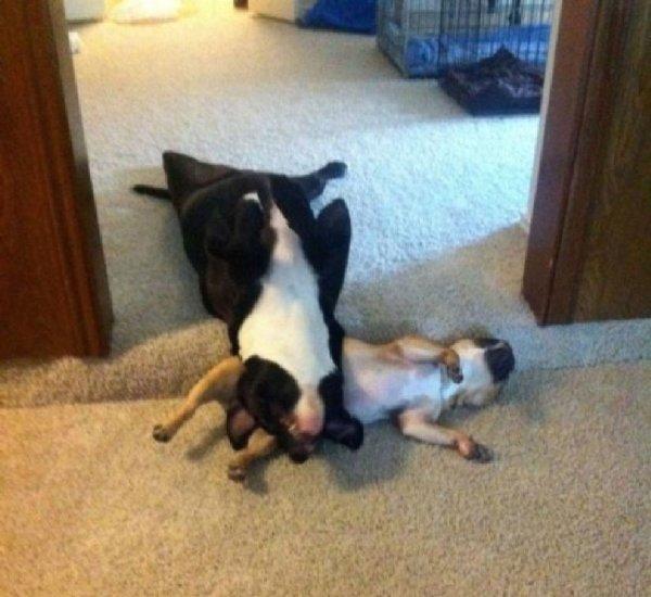 http://soocurious.com/fr/wp-content/uploads/2015/07/puppies-sleeping-15.jpg