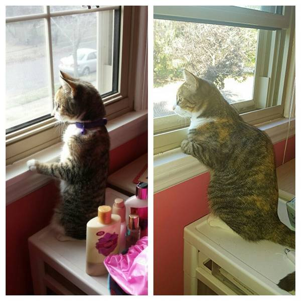 http://www.oneway.com/have-you-noticed-how-our-pets-change-with-time-30-adorable-pics-then-and-now/
