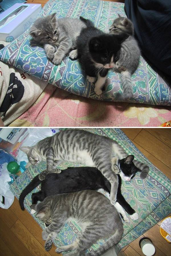 http://www.boredpanda.com/cats-growing-up-before-and-after/