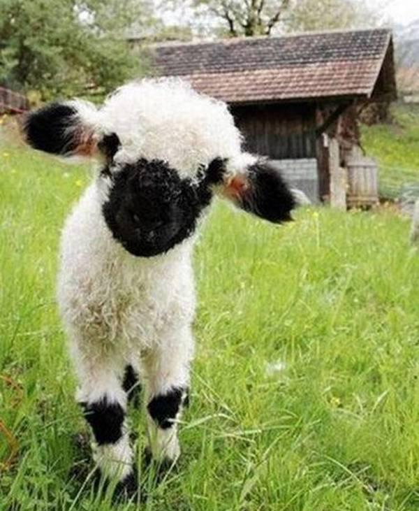 http://www.newsbeast.gr/files/1/2013/10/30/animals7.jpg