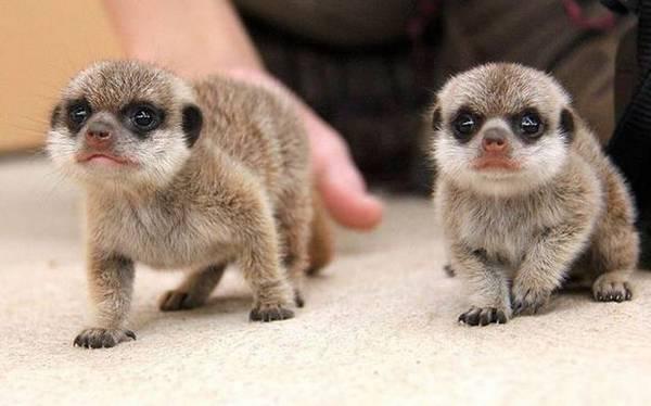 http://amazing-creature.blogspot.fr/2016/02/funny-animals-of-week-12-february-2016.html#.VxYgpTCLS70
