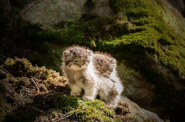 bebes-animaux-voit-pas-souvent-adorables (4)