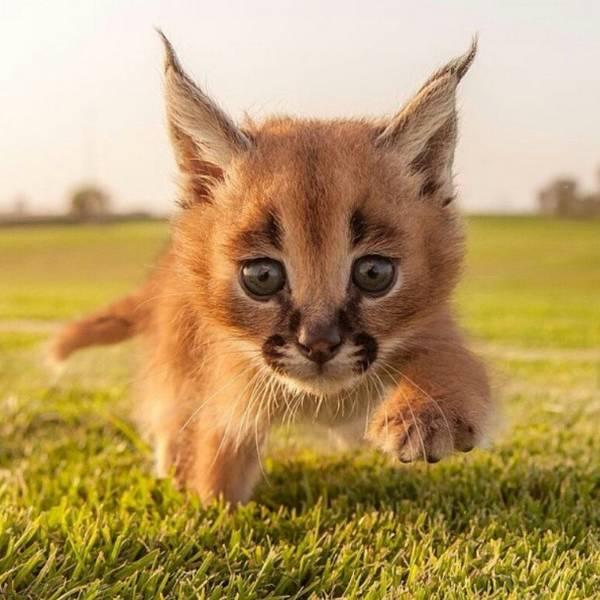 http://amazing-creature.blogspot.fr/2016/03/funny-animals-of-week-18-march-2016-40.html#.VxYUmzCLS70