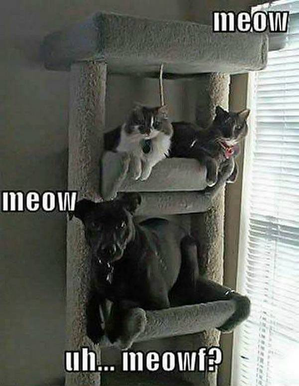 chiens-pas-compris-chats (17)