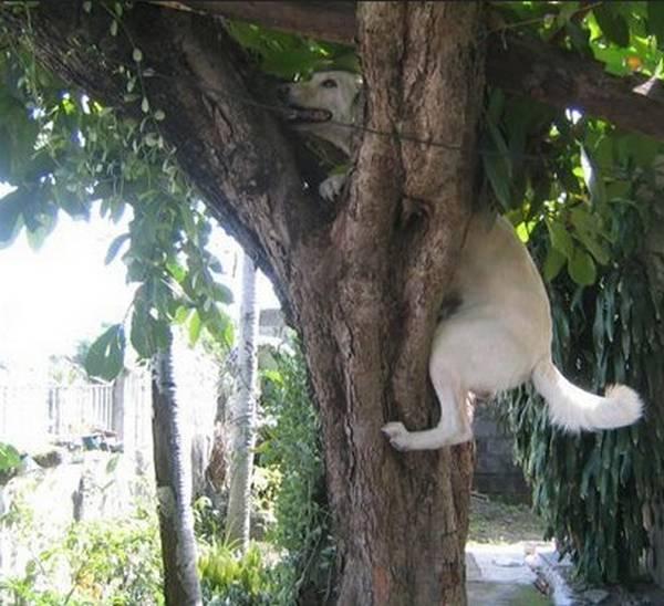 chiens-pas-compris-chats (22)