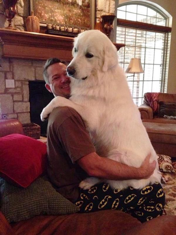 http://www.viralistas.com/perros-que-se-han-convertido-en-perrotes/