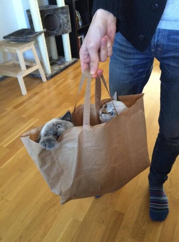 http://amazing-creature.blogspot.fr/2016/03/funny-cats-part-200-40-pics-10-gifs.html#.VwZp46SLS70