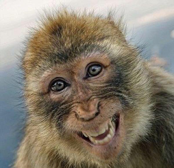 http://zoovet74.ru/images/monkey-2016.jpg