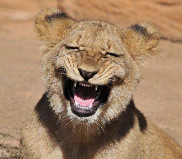 http://cute-care.xtgem.com/images/blog/smiling-lion-20796.jpeg