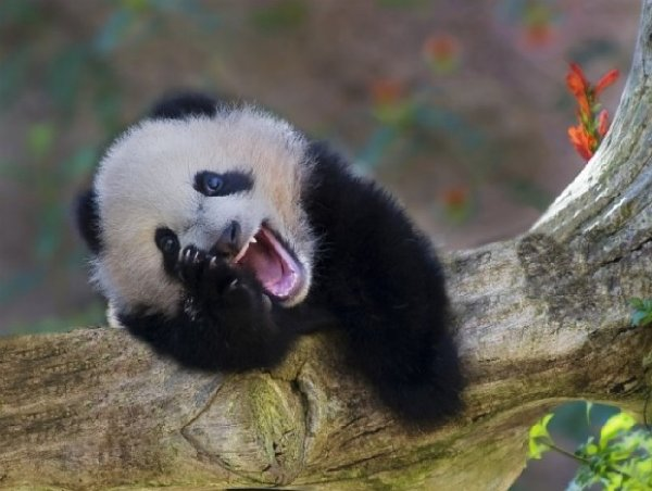 http://medias.digitamix.com/10412/ces-50-animaux-la-sont-heureux-et-ils-comptent-bien-le-partager-193460.jpg