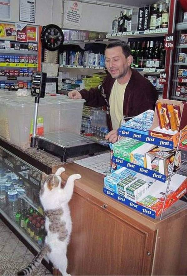 http://amazing-creature.blogspot.fr/2016/03/funny-cats-part-199-40-pics-10-gifs.html#more