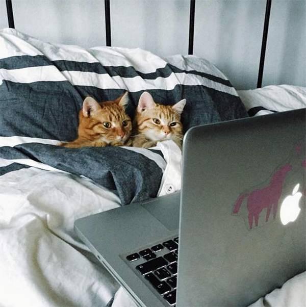 http://amazing-creature.blogspot.fr/2016/03/funny-cats-part-200-40-pics-10-gifs.html#.Vv0nUqSLS70
