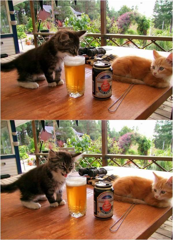 chats-chiens-vous-faire-rire (2)