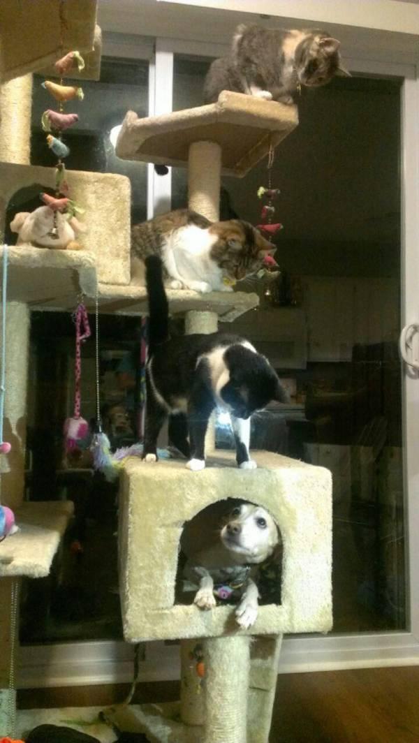 chats-chiens-vous-faire-rire (3)