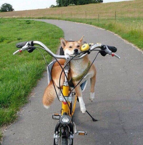 http://amazing-creature.blogspot.fr/2016/03/cute-dogs-part-118-50-pics.html#more