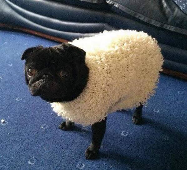 http://amazing-creature.blogspot.fr/2016/05/cute-dogs-part-123-50-pics.html#.VynZX_mLS70