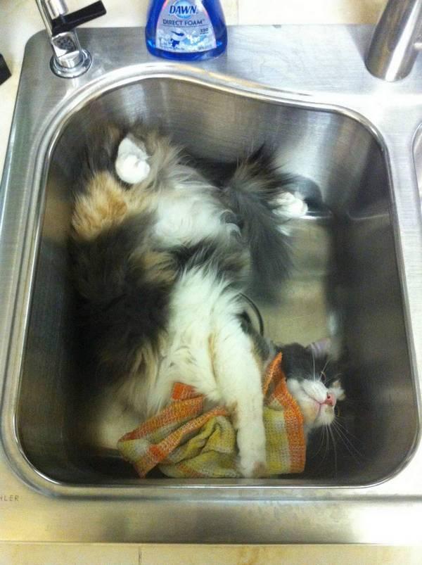 http://amazing-creature.blogspot.fr/2016/04/funny-cats-part-202-40-pics-10-gifs.html#.VxTcCTCLS71