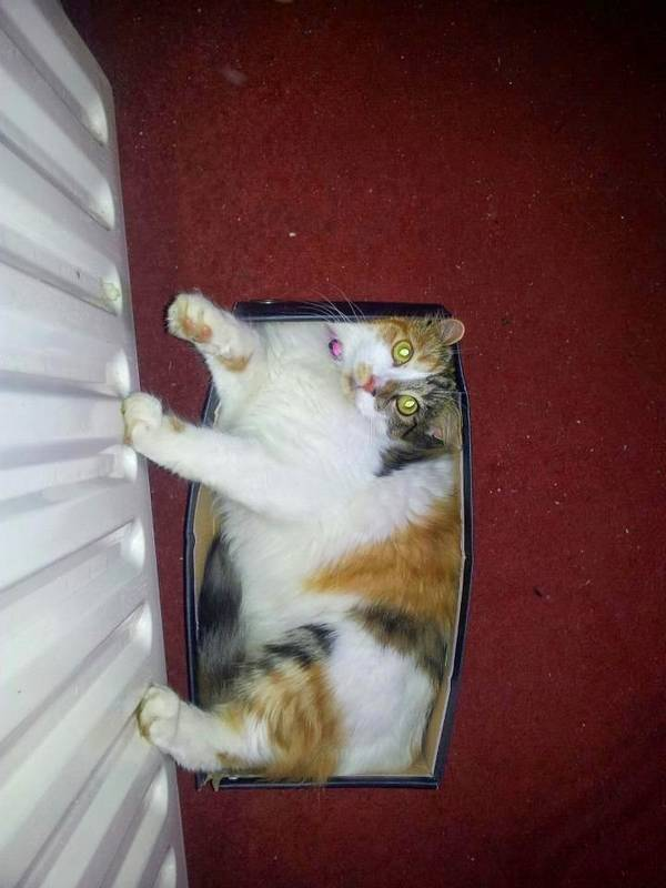http://amazing-creature.blogspot.fr/2015/02/funny-cats-part-140-40-pics-10-gifs.html#.Vrn0eVjhC70