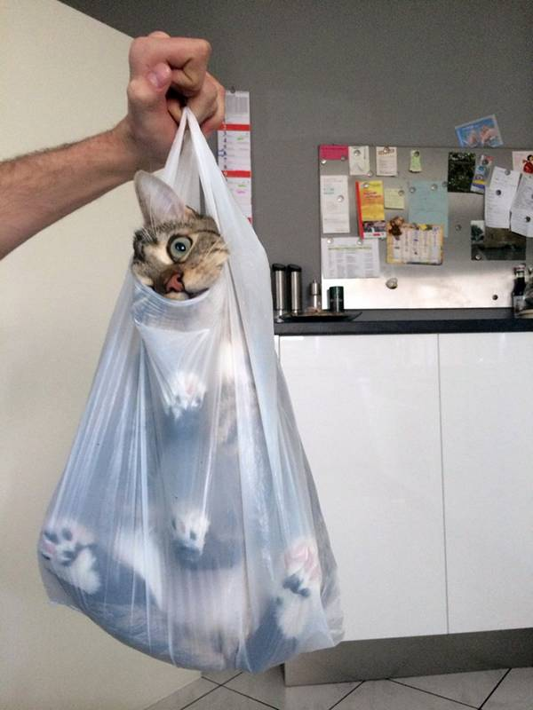 http://amazing-creature.blogspot.fr/2016/03/funny-cats-part-198-40-pics-10-gifs.html#.Vvkv-fmLS70
