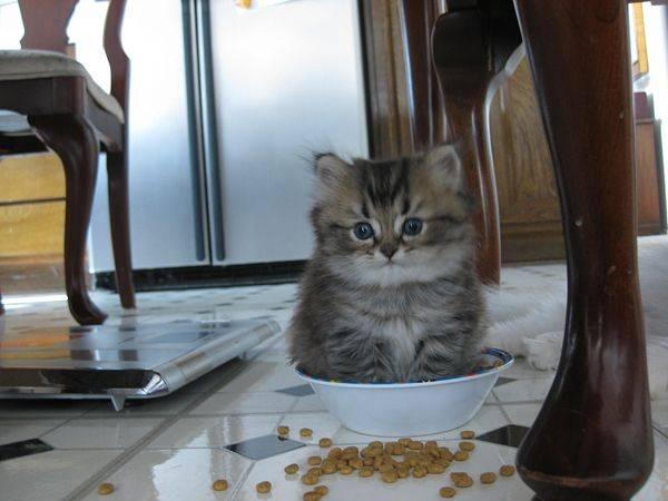 http://amazing-creature.blogspot.fr/2016/04/funny-cats-part-203-40-pics-10-gifs.html#.VxjRyjCLS70