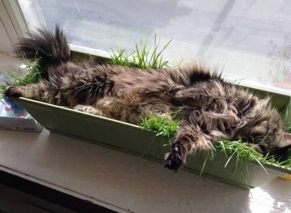 http://amazing-creature.blogspot.fr/2016/04/funny-cats-part-204-40-pics-10-gifs.html#.VyndzfmLS70
