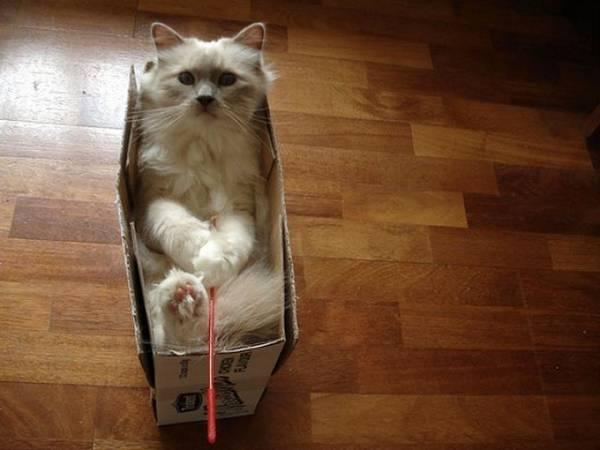chats-endroits-bizarres-uns-que-autres (3)