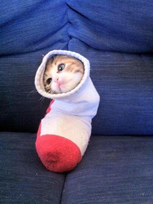 https://t3hwin.com/i/2015/04/Dobby-has-got-a-sock.jpg