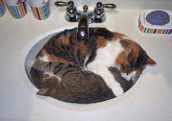 http://funnycatsgif.com/wp-content/uploads/2015/04/cat-nap-hilarious-sleepy-cat-in-a-sink.jpg