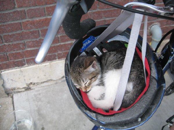 https://themodernjedi.files.wordpress.com/2012/06/bike-helmet.jpg