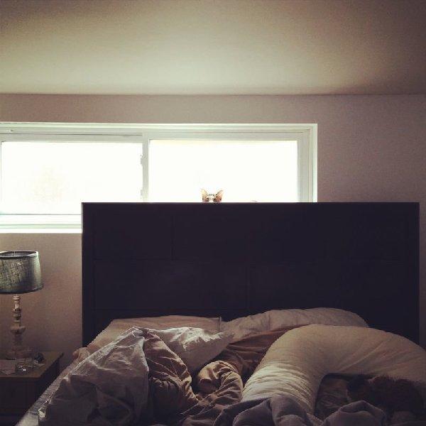 http://cdn-media.ellentv.com/2013/10/10/cat-hiding-1.png