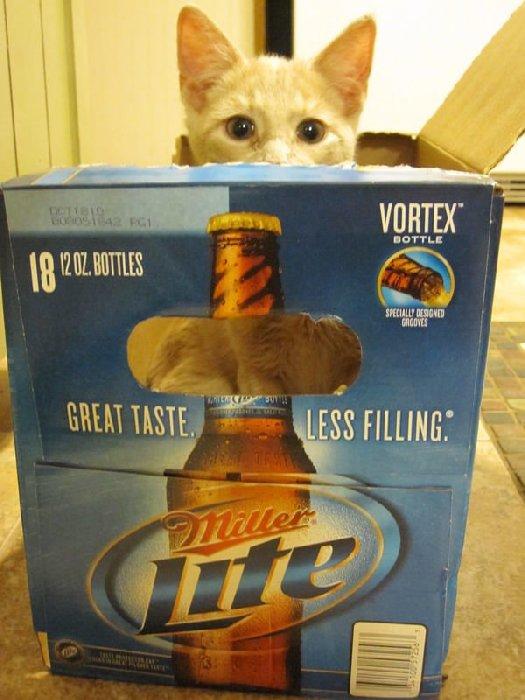 http://cdn-media.ellentv.com/2013/04/29/cat-hiding-1.png