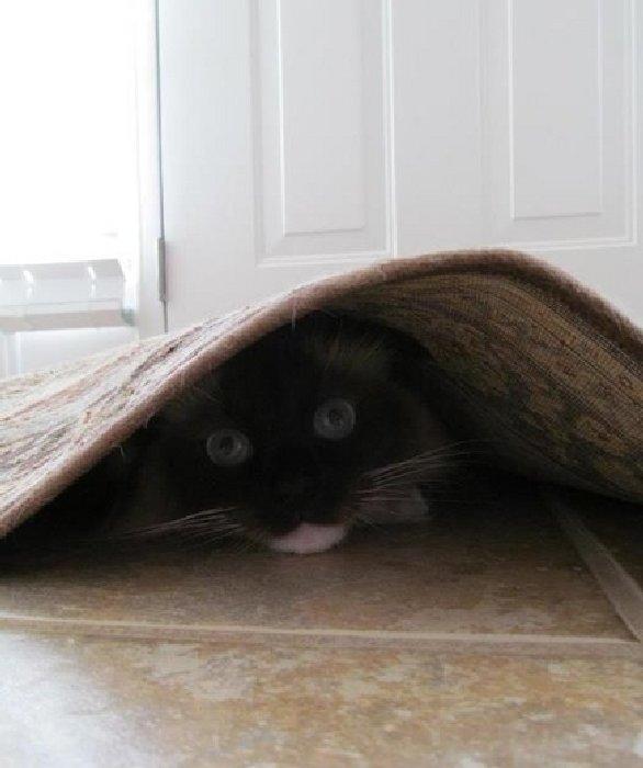 http://photos.ellen.warnerbros.com/gallery-images/2014/06/cats-hiding.png_full.jpg