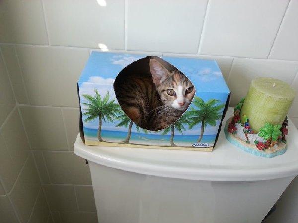 http://cdn-media.ellentv.com/2013/09/12/hiding-cat-1.png