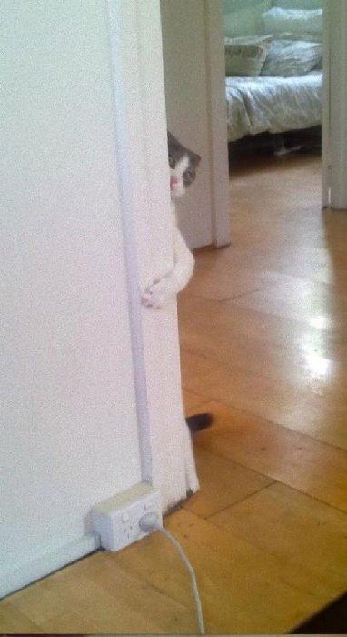 http://www.catdumb.com/wp-content/uploads/2014/12/sn1-211257_095.jpg