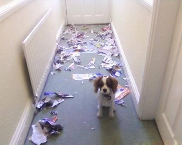 http://www.doodoo.ru/uploads/posts/2012-04/animals-in-house-02.jpg