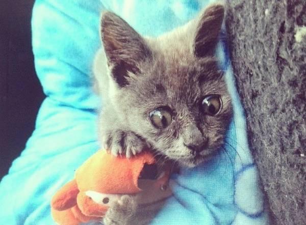 kevin-chat-maladie-hydrocephalie (3)