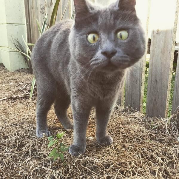 kevin-chat-maladie-hydrocephalie (4)