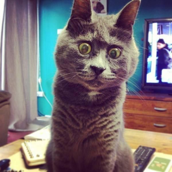 kevin-chat-maladie-hydrocephalie (5)