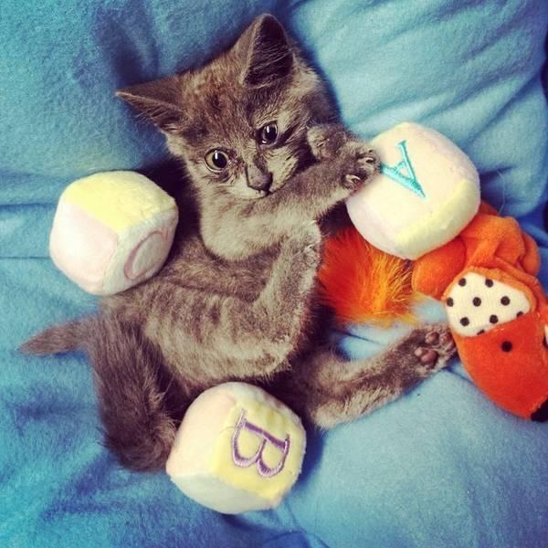 kevin-chat-maladie-hydrocephalie (8)