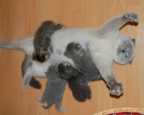 http://36.media.tumblr.com/f97f90d211bcbf5699192ae93eb2bd49/tumblr_nr2vurhpy51rl1jado1_1280.jpg