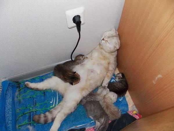 http://chickgeek.org/wp-content/uploads/2013/08/mommy.jpg