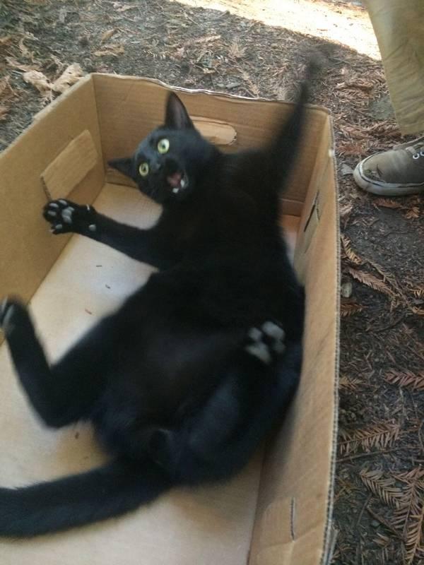 chats-bizarres-choses-bizarres (6)