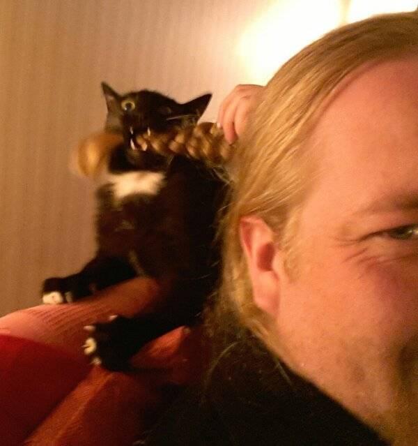 http://amazing-creature.blogspot.fr/2016/01/funny-cats-part-188-40-pics-10-gifs.html