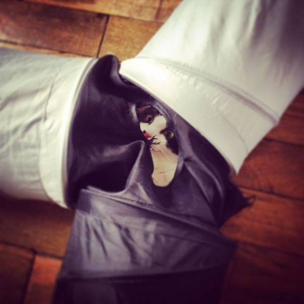 chats-chiens-trouverez-jamais (7)