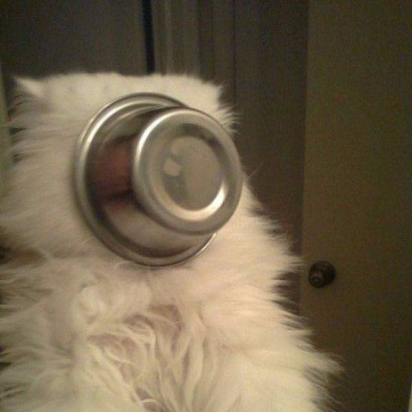 http://amazing-creature.blogspot.fr/2014/05/funny-cats-part-102-40-gifs-10-gifs.html