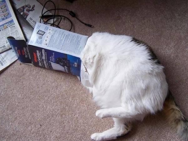 chats-coinces-tout-seul (15)
