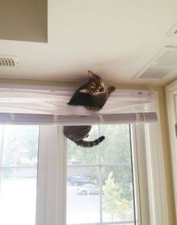 http://emgn.com/entertainment/21-cats-who-made-terrible-life-decisions-and-now-regret-everything-2/